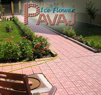Company Pavaje Ice Flowers. Description and contact information.